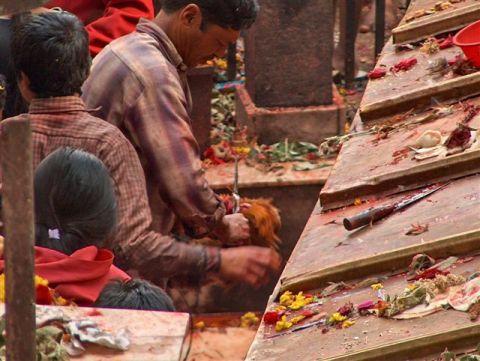 dakshinkali-offering
